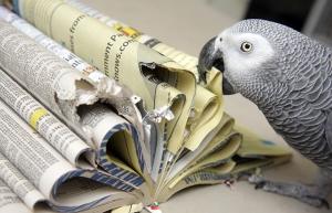 parrot-phone book